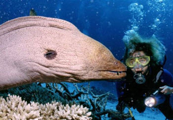 diving thailand